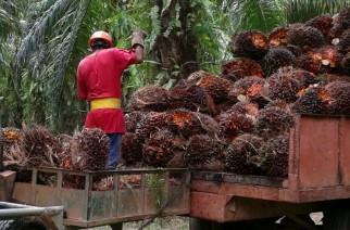 Henkel e organização Solidariedade fomentam cultivo sustentável de óleo de palma