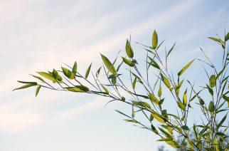 Curso oferece ferramentas de gestão aplicada à sustentabilidade