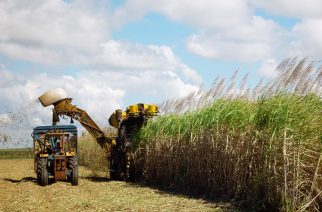 BASF e ACE lançam aceleradora de startups para agronegócio