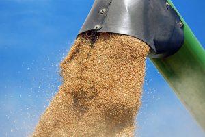 wheat-1508654_960_720