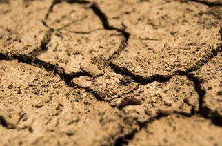 BASF apoia projetos de recomposição de áreas degradadas e alteradas