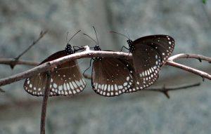 butterfly-332399_640