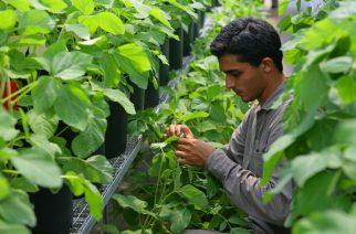 BASF, AMAGGI e RTRS realizam estudo sobre cadeia da soja