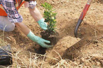 BASF lança blog para agricultor