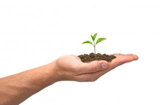 Bayer renova cooperação no segmento da soja