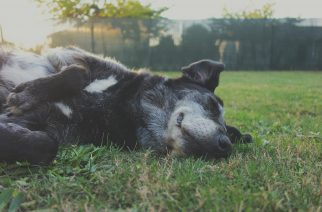 Petz e Bayer promoveram maratona de saúde pet no Parque Villa-Lobos