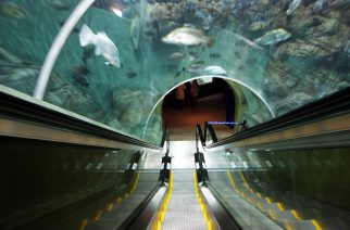 Shangai Aquarium na China