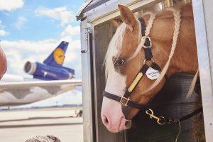Lufthansa Cargo_Horses1peg
