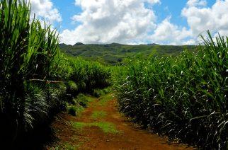 Bayer firma parceria em prol de uma agricultura mais sustentável