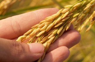 BASF reúne os principais sementeiros do Brasil para discutir os desafios na proteção de sementes