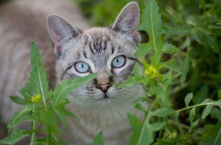 Boehringer Ingelheim Saúde Animal apresenta novo tratamento para felinos