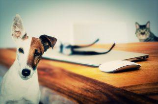 Bayer lança desafio online para saúde animal