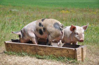 Evonik adquire negócio de probióticos para nutrição animal