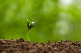 BASF oferece bolsa de estudo para curso de Agronegócio