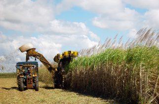 BASF divulga ação sobre a importância da tecnologia para a agricultura brasileira