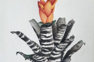 Pintura: Sebastião Inacio dos Santos